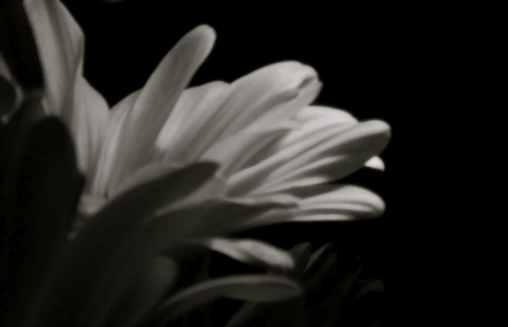 De Fleur