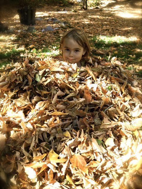 dewa leaf pile