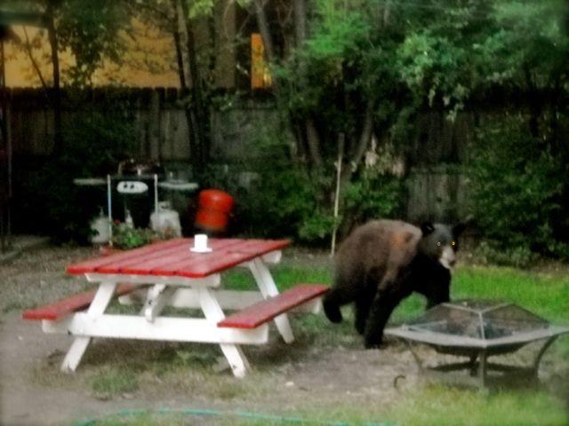 Bear Smart…
